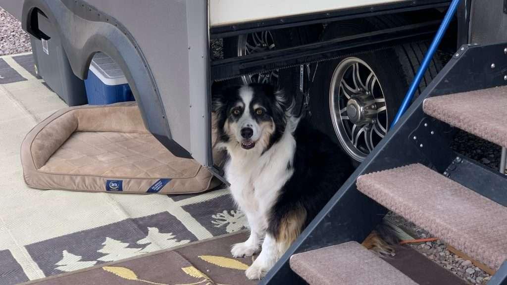 Silver Sage RV Park - pet friendly